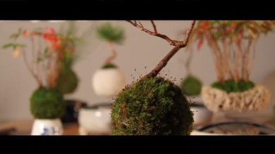 air_bonsai3