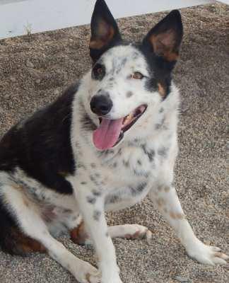 Southern Utah Adoptable Pets Guide