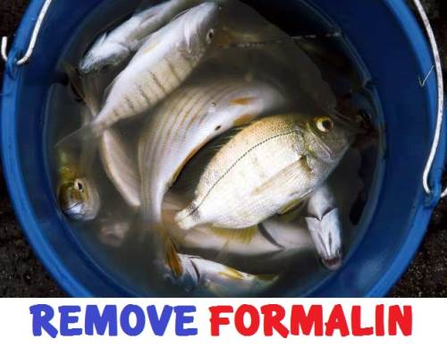 How To Remove Formalin/Formaldehyde From Food