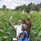 Kontribusi nyata BI Sumbar melalui Pengembangan Klaster Hortikultura di Payakumbuh