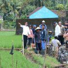 Presiden Tinjau Proyek Padat Karya di Tasikmalaya