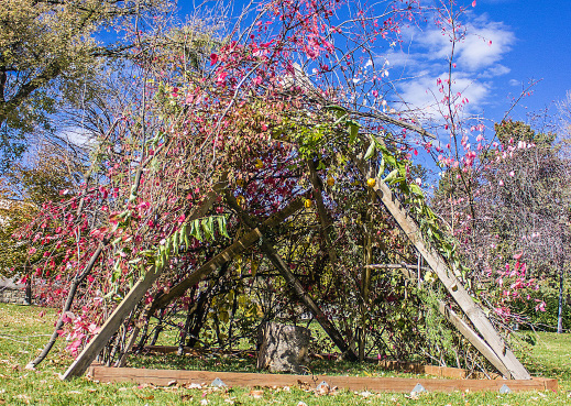 A Sukkah that Rosen and RMC students built to celebrate the traditional Jewish holiday of Sukkot. Photo by Nicolas Cordero