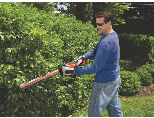 A man trimming his beech hedge plant