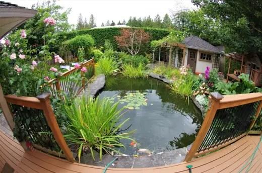 best koi pond plants