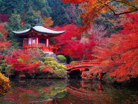 Image result for kyoto japan autumn