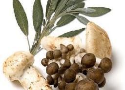 Organic Wild Mushroom & Sage