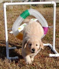 Future agility pup!