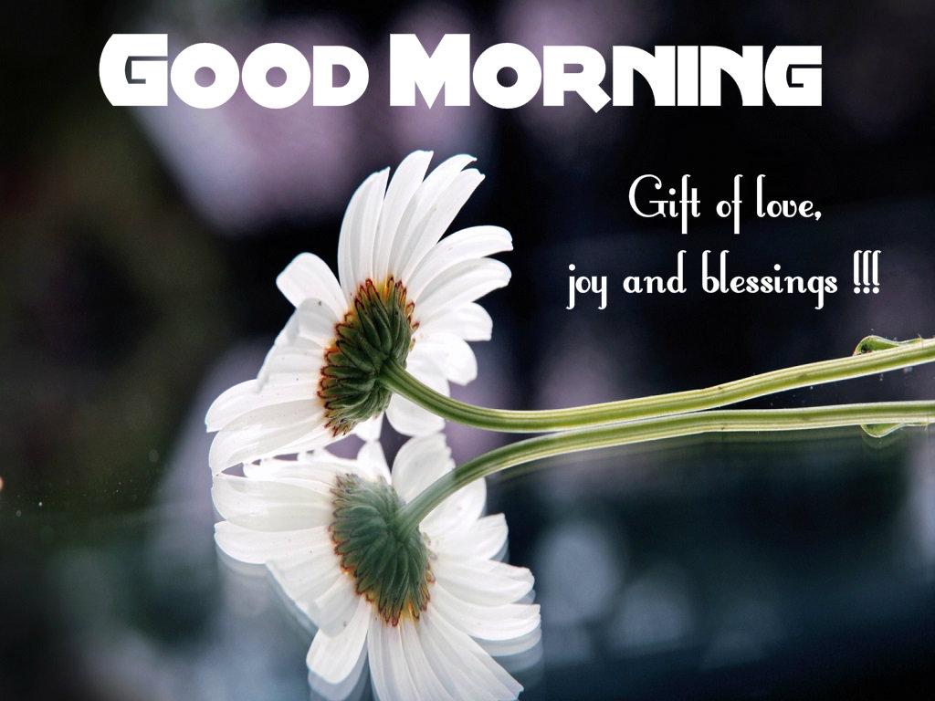Good Afternoon Wallpaper With Quotes صور صباح الخير Good Morning صور مكتوب عليها صباح الخير