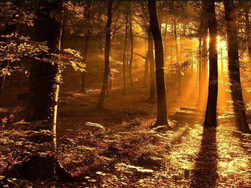 Fall Wooded Wallpaper صور خلفيات مناظر طبيعية جميلة وخلابة سوبر كايرو