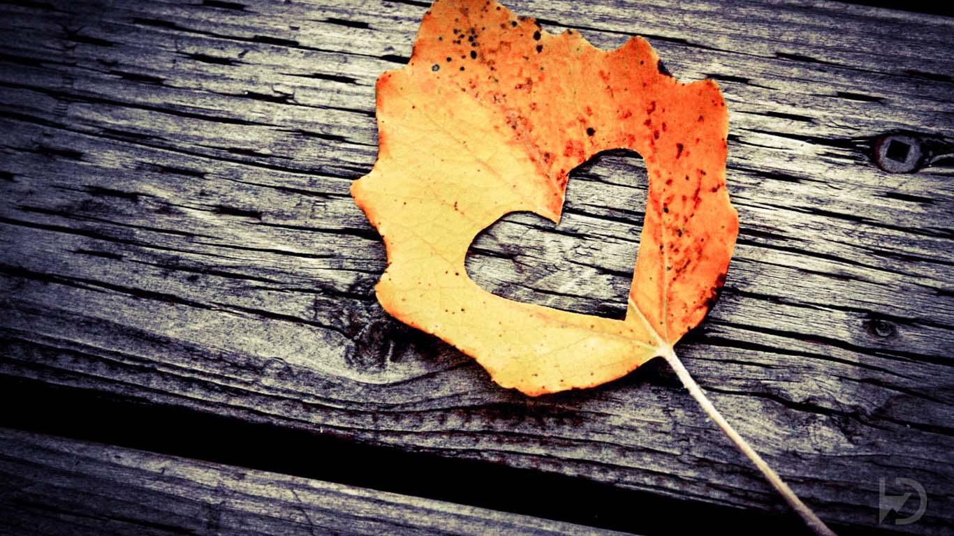 Fall Leaf Wallpaper For Mobile خلفيات فيسبوك جديده مميزه جدا Hd سوبر كايرو