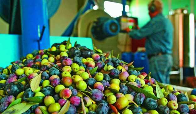Producción olivícola.