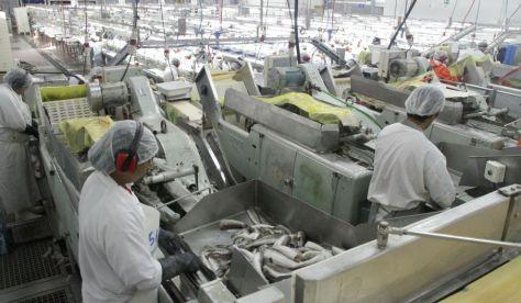 Planta de procesamiento de merluza en Puerto Madryn. FOTO: MAGyP.