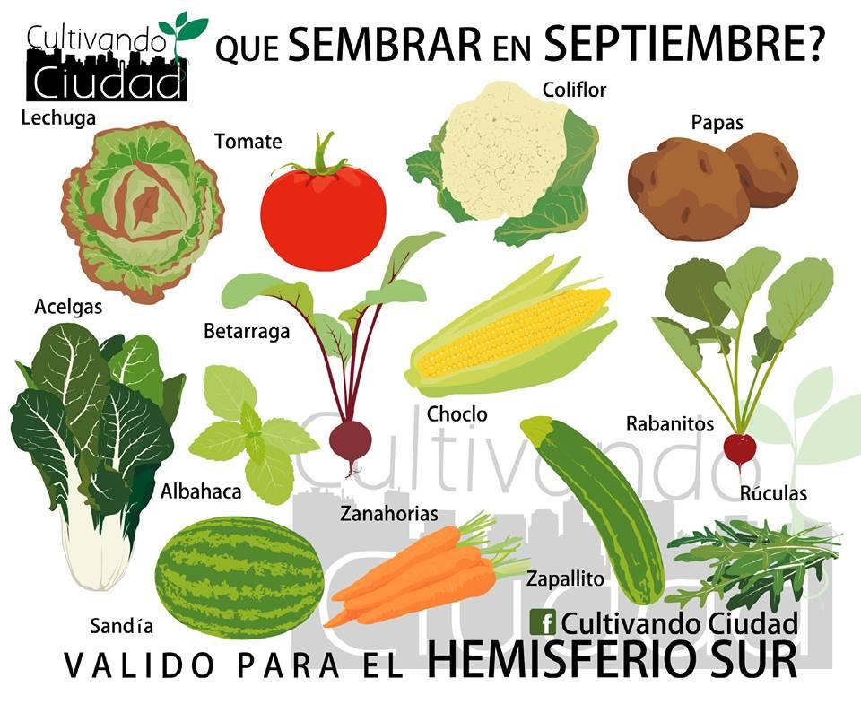 Huerta en casa qu sembrar en primavera supercampo - Que plantar en el huerto ...