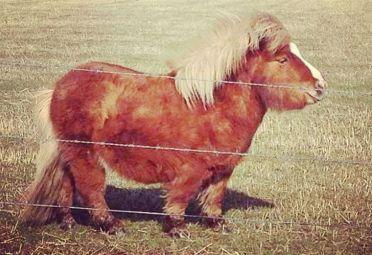 caballos mini 1