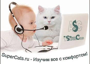 webinar-logo_web
