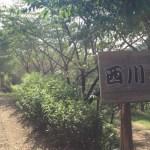 [カブでプチツー]真夏の西川花公園で花見ランチ