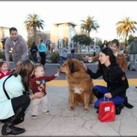 Superdog | Dog Training Sacramento