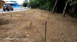 Coronado- Vecinos limpian lote y siembran huerta comunitaria