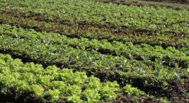 la-agroecologia