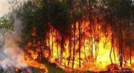 Incendios forestales devastan Reserva Biologica Indio Maiz3