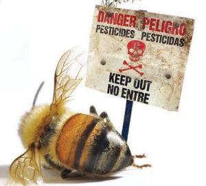 Sin abejas no hay agricultura
