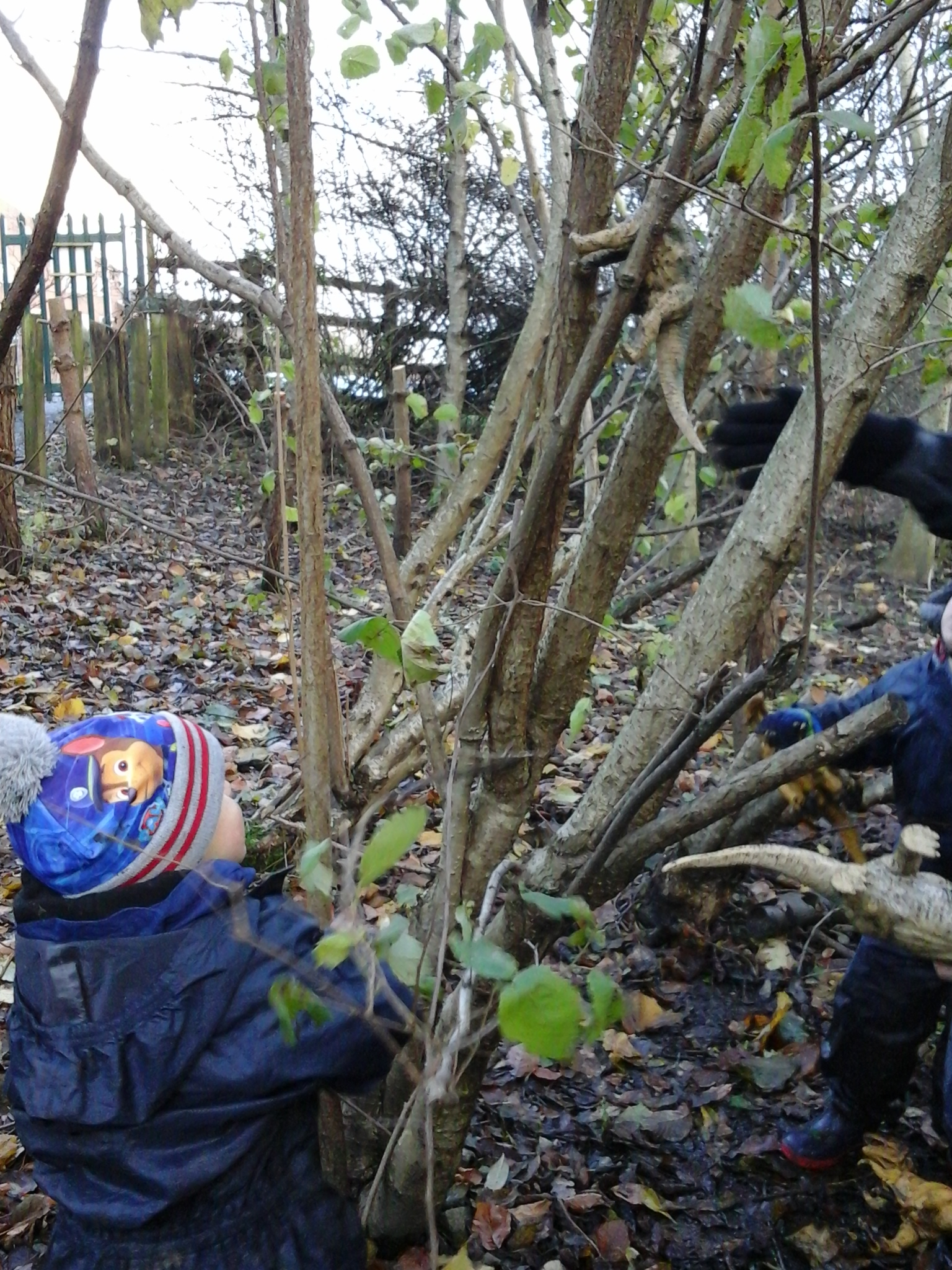 BCFC WCFC Forest School 27.11 (70)