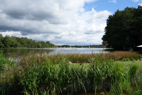 Frensham Pond
