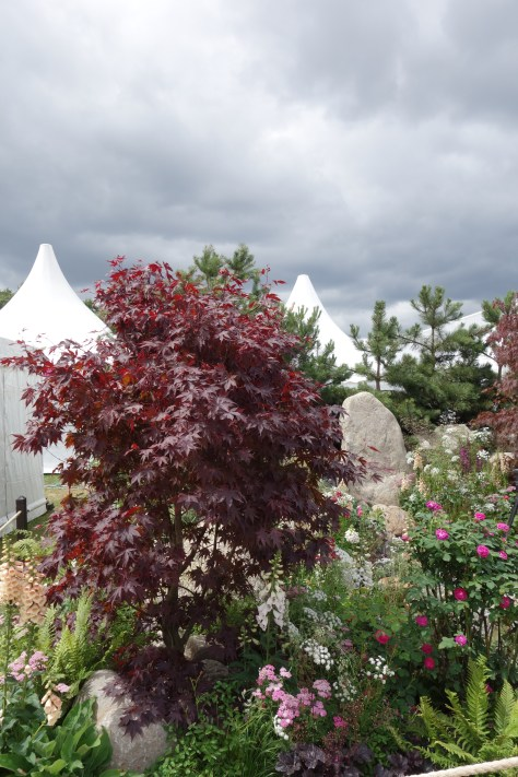 RHS Hampton Court Flower Show