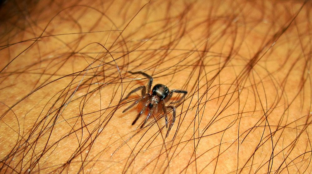 Spider Bite? Here\u0027s How To Treat It How to Handle a Spider Bite