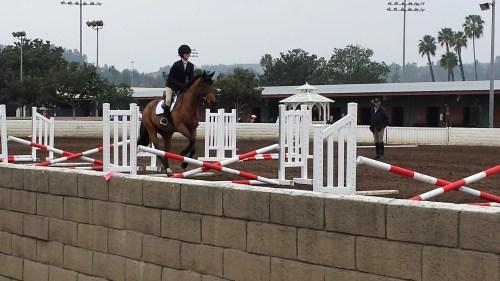 Horse Expo