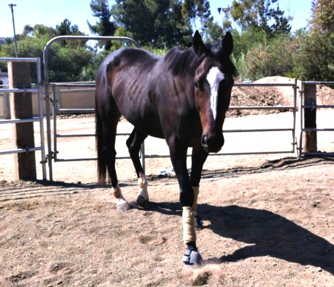 before photo of ex-racehorse