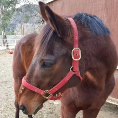 horse actor