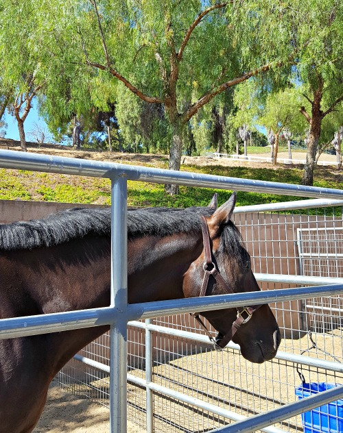 Scope for Equine Ulcers