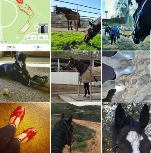 Horse Instagram
