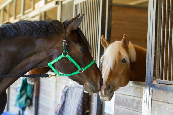 Beta Biothane Halter from Two Horse Tack