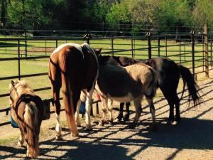 Spirit Horse Ranch herd