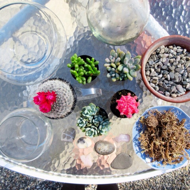 DIY succulent terrarium sustainable daisy thrifting step by step environmental