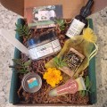 natural beauty sustainable daisy green beauty ecobeauty all natural products terra bella box monthly subscription