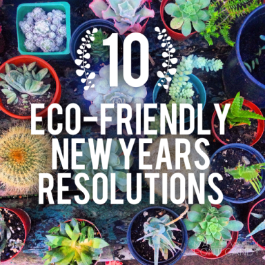 10 eco-friendly new years resolutions ecofriendly sustainable daisy sustainability fashion blogger 2016 nye
