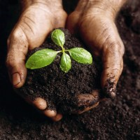 Hands Holding a Seedling and Soil
