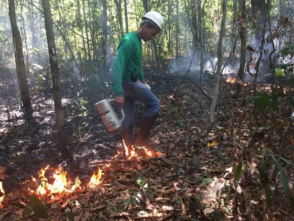 Pesquisador coloca fogo em parcela da floresta para estudar os impactos dos incêndios na Amazônia. Crédito: Giovana Girardi / Estadão
