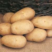 Seed Potatoes - Bargain Patio Growing Kit