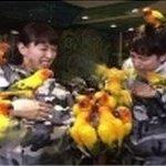 浅草の鳥カフェ6月9日放送の火曜サプライズで紹介!気になる料金やシステムは?