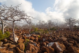 Rocky Landscape on Seymour Island
