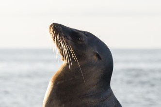 Wild sea lion on the Eco Galaxy 2 Catamaran