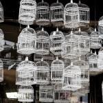 2016-03-Life-of-Pix-free-stock-bird-cages-white-LEEROY (1)