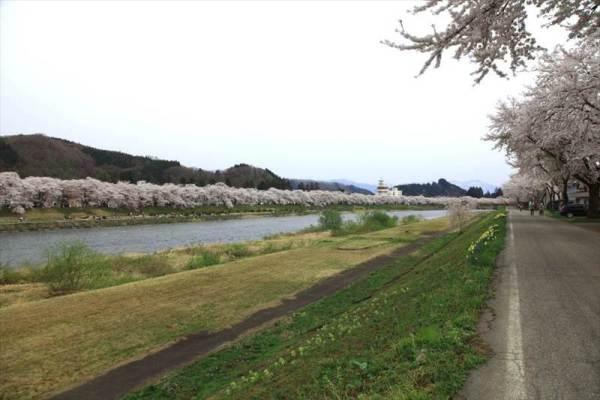 角館の桜角館の桜角館の桜角館の桜