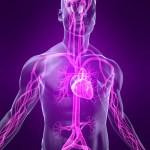 Nervų sistema