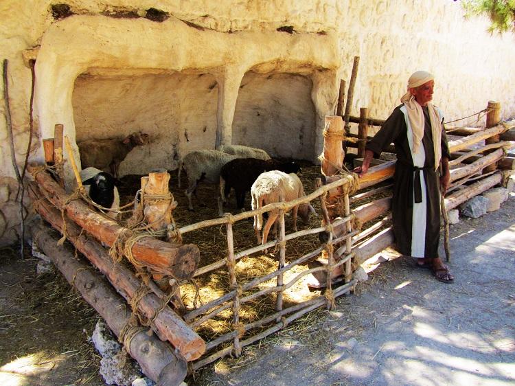 Israel - Nazareth Village - Sheperd