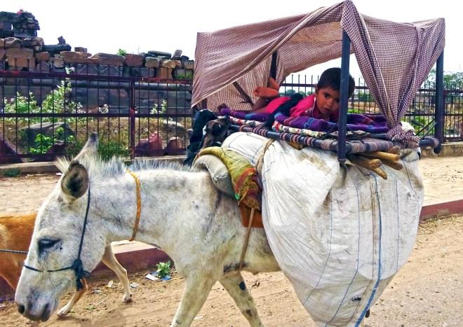 Nomads - Jaipur - 1